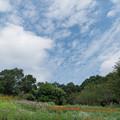 Photos: 里山ガーデンフェスタ【大花壇の眺め】1