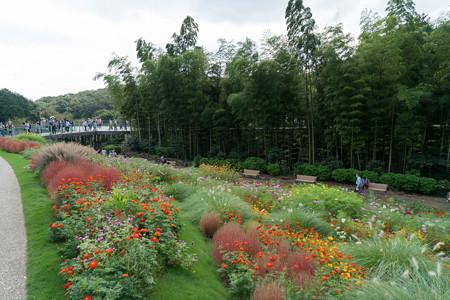 里山ガーデンフェスタ【大花壇の眺め】7