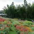 Photos: 里山ガーデンフェスタ【大花壇の眺め】7