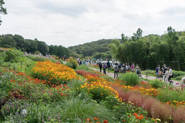 里山ガーデンフェスタ【大花壇の眺め】8