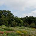 Photos: 里山ガーデンフェスタ【大花壇の眺め】2