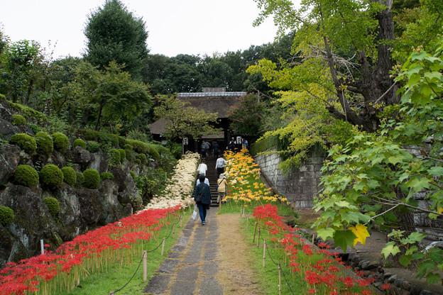西方寺【参道の眺め】1