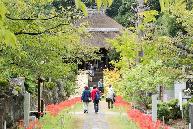 西方寺【参道の眺め】2