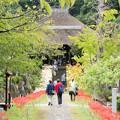Photos: 西方寺【参道の眺め】2