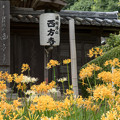 西方寺【茅葺きの山門】2