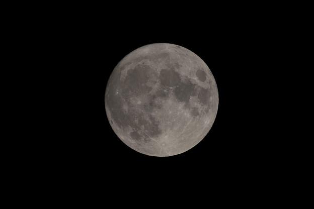 中秋の名月【D850】