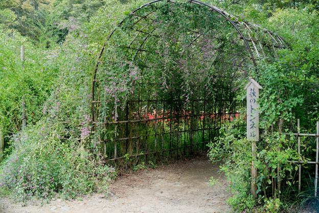 府中市郷土の森【萩の花】1