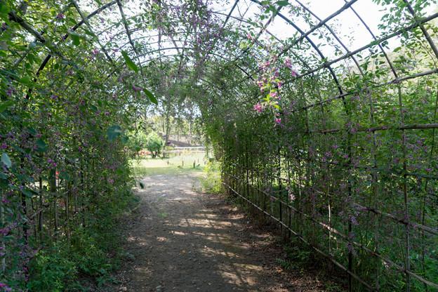 府中市郷土の森【萩の花】3