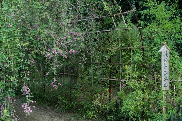 府中市郷土の森【萩の花】2