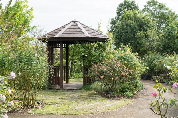 花菜ガーデン【バラ園の様子】2