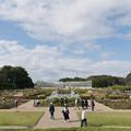 01神代植物公園【バラ園の眺め】1