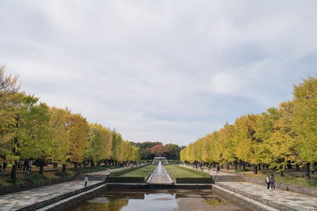 01昭和記念公園【カナールの眺め】1