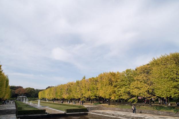 02昭和記念公園【カナールの眺め】2