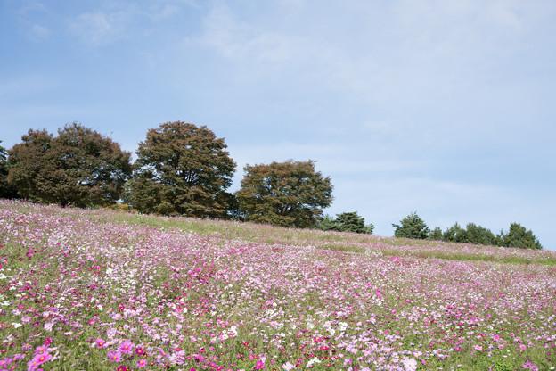 04昭和記念公園【花の丘の眺め】2