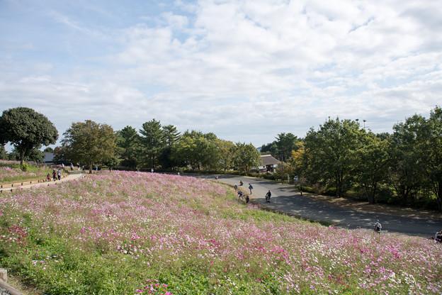 06昭和記念公園【花の丘の眺め】4