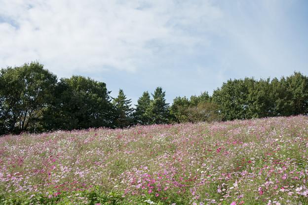 03昭和記念公園【花の丘の眺め】1
