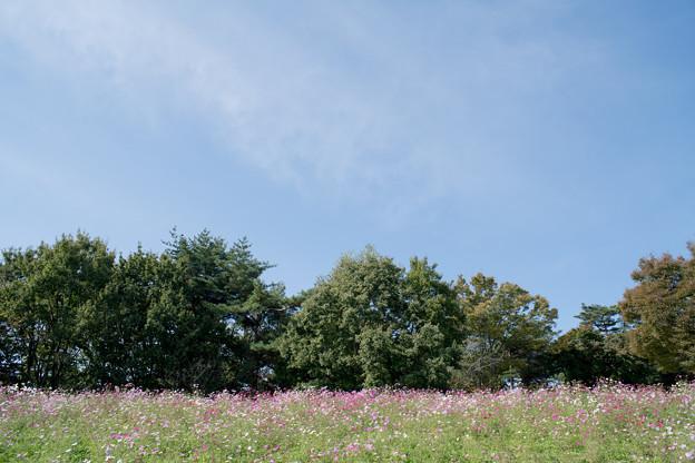 05昭和記念公園【花の丘の眺め】3