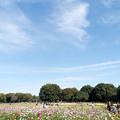 22昭和記念公園【原っぱ南花畑の眺め】1