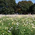 23昭和記念公園【原っぱ南花畑の眺め】2