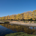 02昭和記念公園【カナールの光景】2