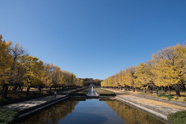 Photos: 01昭和記念公園【カナールの光景】1