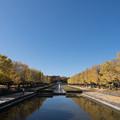 01昭和記念公園【カナールの光景】1