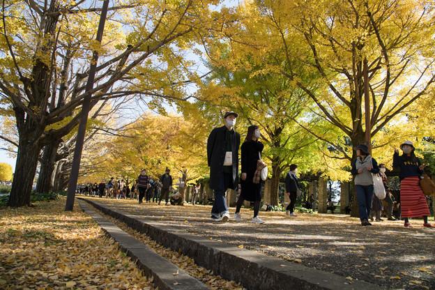 04昭和記念公園【カナールの光景】4