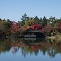 Photos: 06昭和記念公園【日本庭園:清池軒】1