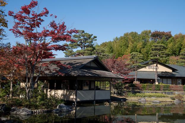 07昭和記念公園【日本庭園:清池軒】2