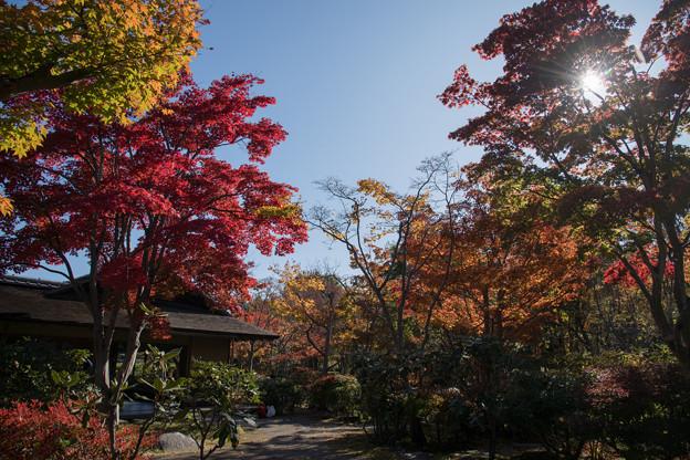 08昭和記念公園【日本庭園:清池軒】3