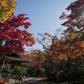 Photos: 08昭和記念公園【日本庭園:清池軒】3