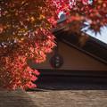 Photos: 09昭和記念公園【日本庭園:清池軒】4