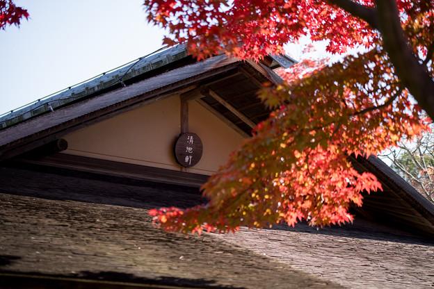 10昭和記念公園【日本庭園:清池軒】5