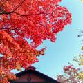 11昭和記念公園【日本庭園:清池軒】6銀塩
