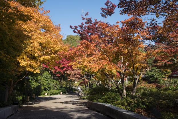 12昭和記念公園【日本庭園:紅葉の様子】01