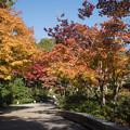 Photos: 12昭和記念公園【日本庭園:紅葉の様子】01