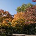 Photos: 13昭和記念公園【日本庭園:紅葉の様子】02