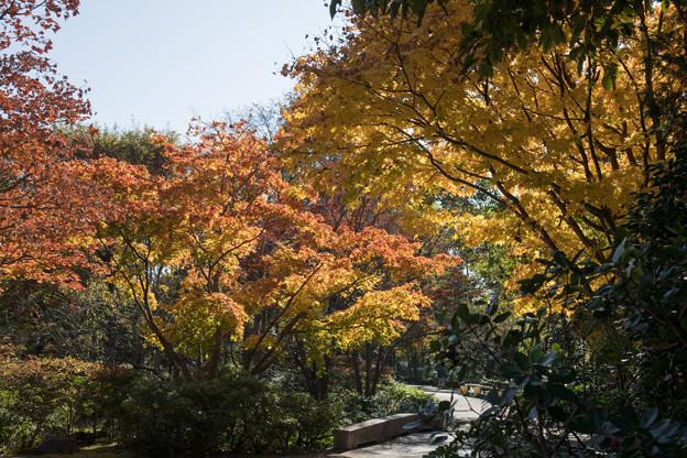 17昭和記念公園【日本庭園:紅葉の様子】06