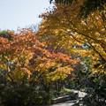 Photos: 17昭和記念公園【日本庭園:紅葉の様子】06