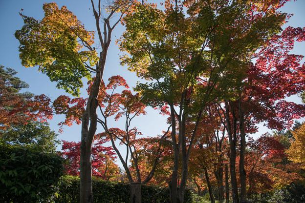18昭和記念公園【日本庭園:紅葉の様子】11