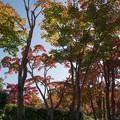 Photos: 18昭和記念公園【日本庭園:紅葉の様子】11
