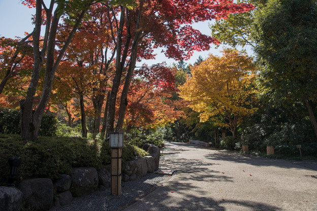 19昭和記念公園【日本庭園:紅葉の様子】12