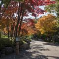Photos: 19昭和記念公園【日本庭園:紅葉の様子】12