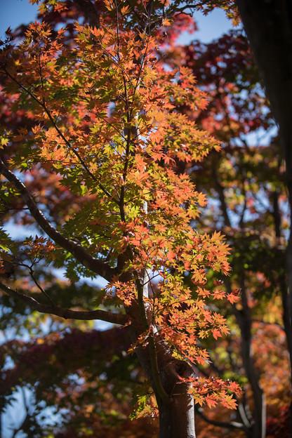 21昭和記念公園【日本庭園:紅葉の様子】14