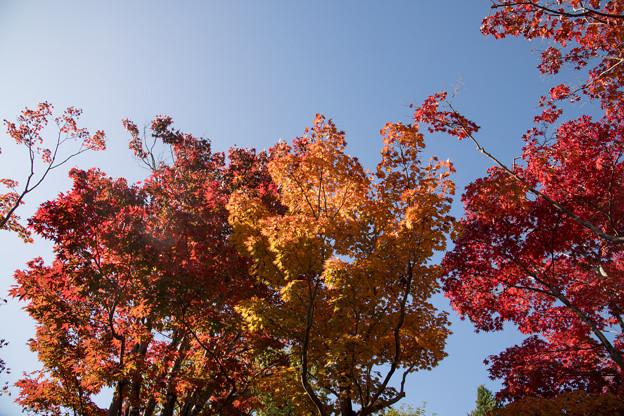 14昭和記念公園【日本庭園:紅葉の様子】03