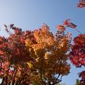 Photos: 14昭和記念公園【日本庭園:紅葉の様子】03