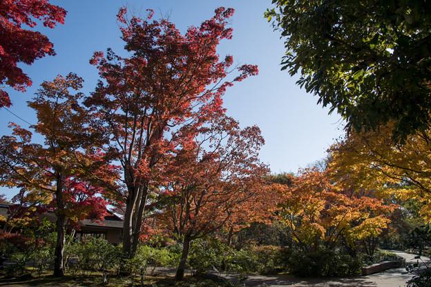 16昭和記念公園【日本庭園:紅葉の様子】05