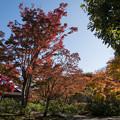 Photos: 16昭和記念公園【日本庭園:紅葉の様子】05