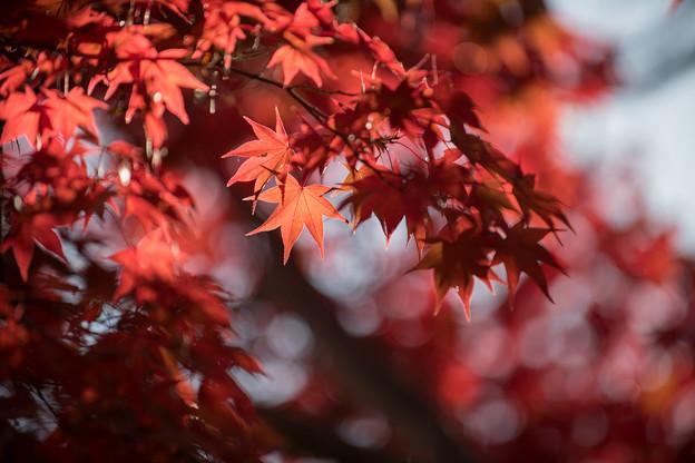 23昭和記念公園【日本庭園:紅葉の様子】16