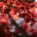 Photos: 23昭和記念公園【日本庭園:紅葉の様子】16